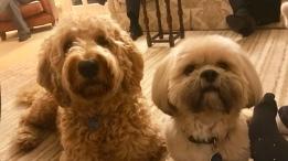 Monty & Bobby at Christmas