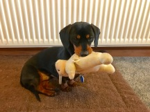 Archie Sausage Dog with his Toy